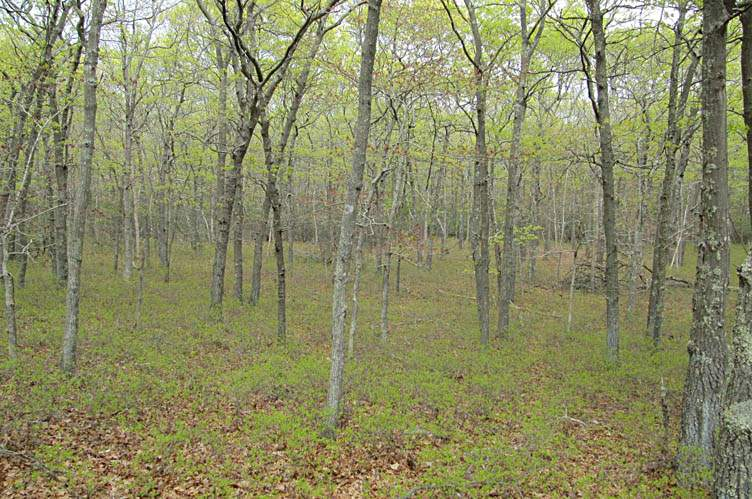 Land for Sale at Create Your Own Estate In Water Mill Water Mill, New York