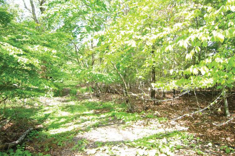Land for Sale at Amagansett South Of The Highway East Hampton, New York