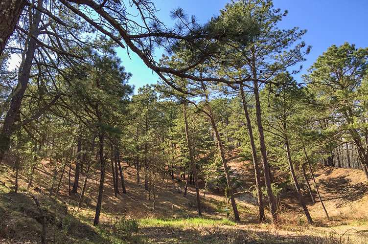 Land for Sale at Water Mill North Parcel Water Mill, New York